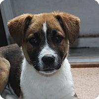 Adopt A Pet :: Gracelyn & Georgia - PENDING - kennebunkport, ME
