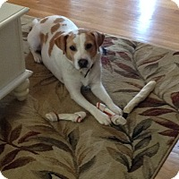 Adopt A Pet :: Chandler - Greenville, SC