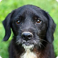 Adopt A Pet :: Vinny - San Antonio, TX