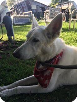 German Shepherd Dog Dog for adoption in Mount Hope, Ontario - Brook