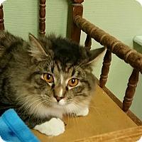 Adopt A Pet :: Donald - Medina, OH