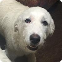 Adopt A Pet :: Polly  *Adopted - Tulsa, OK