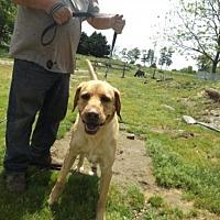 Adopt A Pet :: Milo - Zaleski, OH