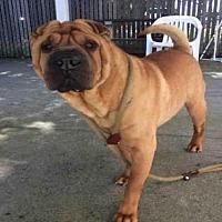 Adopt A Pet :: RIDLEY - Alameda, CA