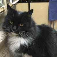 Adopt A Pet :: Claire - ALOHA, OR
