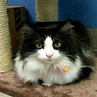Adopt A Pet :: MINT - Canfield, OH