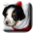 Basset Hound Mix Puppy for adoption in Marietta, Georgia - Bessie