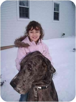 Great Dane Mix Dog for adoption in Bay City, Michigan - Max~~ADOPTED~~