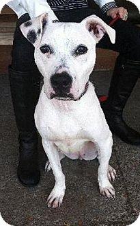 Labrador Retriever Mix Dog for adoption in Farmington Hills, Michigan - Alice