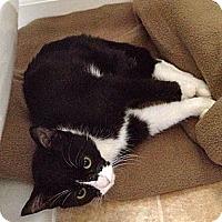 Adopt A Pet :: Precious - Escondido, CA