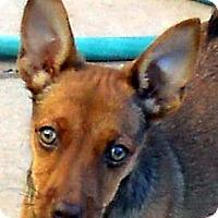 Adopt A Pet :: Baby Delilah - Oakley, CA
