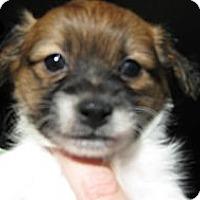Adopt A Pet :: Baby Hunter - Oakley, CA