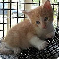 Adopt A Pet :: Callaway - Acme, PA