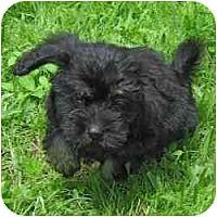 Adopt A Pet :: Pepper - Homestead, FL