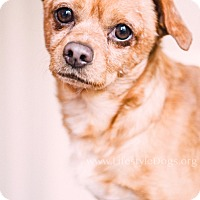 Adopt A Pet :: Tucker ~ Adoption Pending - Youngstown, OH