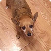 Adopt A Pet :: Jasmine - Albert Lea, MN