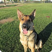 Adopt A Pet :: Inga Von Altenberg - Phoenix, AZ