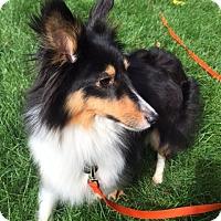 Adopt A Pet :: Jaelyn - Circle Pines, MN