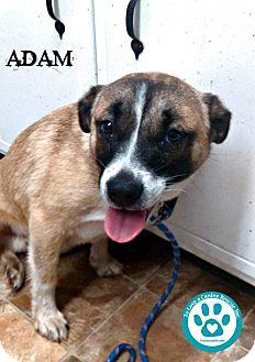Shepherd (Unknown Type) Mix Puppy for adoption in Kimberton, Pennsylvania - Adam