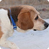 Adopt A Pet :: Sadie - Creston, CA