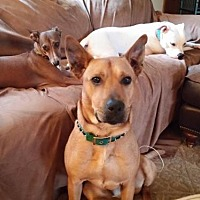 Shepherd (Unknown Type) Mix Dog for adoption in Whitestone, New York - Hagar