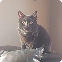 Adopt A Pet :: Othello - Colmar, PA