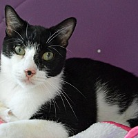 Adopt A Pet :: Bellona - Middletown, NY