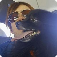 Adopt A Pet :: Stanley - Las Vegas, NV
