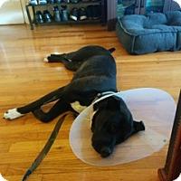 Adopt A Pet :: Nova - Simi Valley, CA