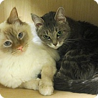 Adopt A Pet :: Sterling and Quincy - Roseville, MN