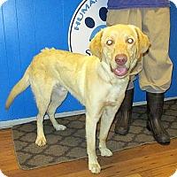 Adopt A Pet :: 17-d06-026 Charlie - Fayetteville, TN