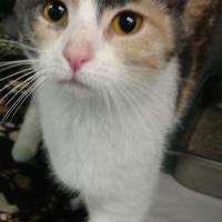 Adopt A Pet :: Lexi - Grand Island, NE