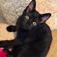Adopt A Pet :: Naomi - Encinitas, CA