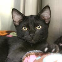 Adopt A Pet :: Christian - St. Petersburg, FL