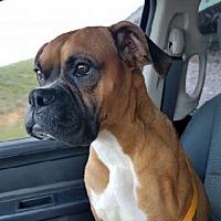 Adopt A Pet :: Mya - Brentwood, TN