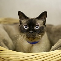 Adopt A Pet :: Nim - Germantown, OH