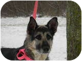 German Shepherd Dog Mix Dog for adoption in Rochester/Buffalo, New York - Mattie