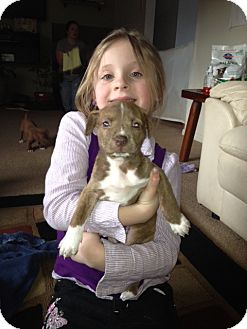Pit Bull Terrier/Labrador Retriever Mix Puppy for adoption in Sinking Spring, Pennsylvania - Lucy