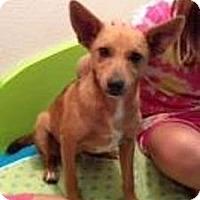 Adopt A Pet :: Pirate - Stilwell, OK