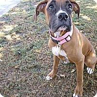 Adopt A Pet :: Princess - Scottsdale, AZ