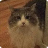Adopt A Pet :: Harley - Colorado Springs, CO