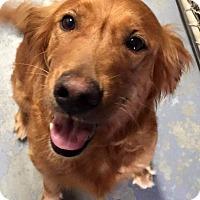 Adopt A Pet :: Genesis - Knoxville, TN