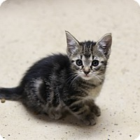 Adopt A Pet :: Randall - CHESTERFIELD, MI
