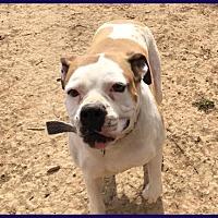 Adopt A Pet :: Betty - Boise, ID