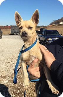 Terrier (Unknown Type, Medium) Mix Dog for adoption in Plainfield, Connecticut - Brumby - reduced fee!