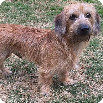 Terrier (Unknown Type, Small) Mix Dog for adoption in CUMMING, Georgia - Petey