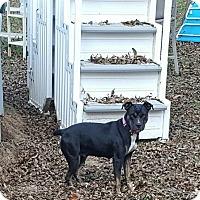 Adopt A Pet :: Skylar - Blue Bell, PA