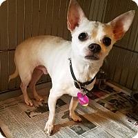 Adopt A Pet :: 22 - Durham, NC
