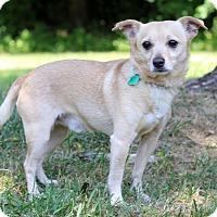 Adopt A Pet :: Sammy - Waldorf, MD