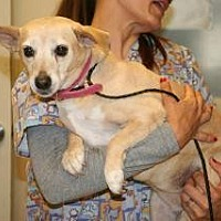 Adopt A Pet :: 355703 LF - Wildomar, CA